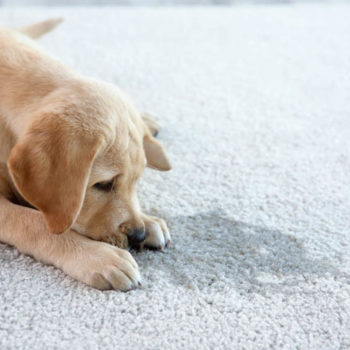 carpet cleaning companies in california